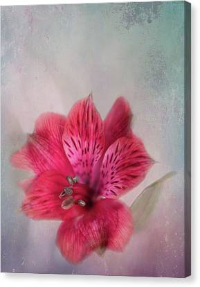 Alstroemeria The Parrot Lily Canvas Print