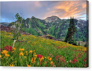 Alta Wildflowers And Sunset Canvas Print
