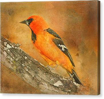 Canvas Print featuring the photograph Altamira Oriole by Bellesouth Studio
