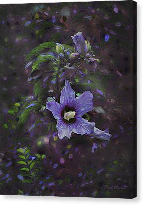 Happy Althea Canvas Print by Frank Maxwell