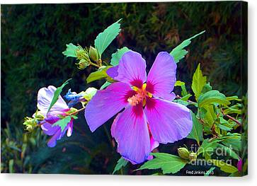 Althea Blossom Canvas Print by Fred Jinkins