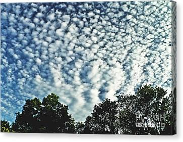 Altocumulus Mackeral Cloud Formation  Canvas Print by Carol F Austin