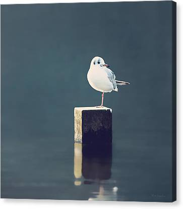 Am I Alone Canvas Print by Wim Lanclus