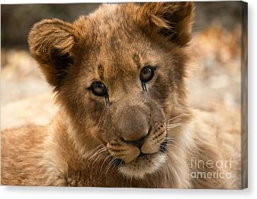 Canvas Print featuring the photograph Am I Cute? by Christine Sponchia