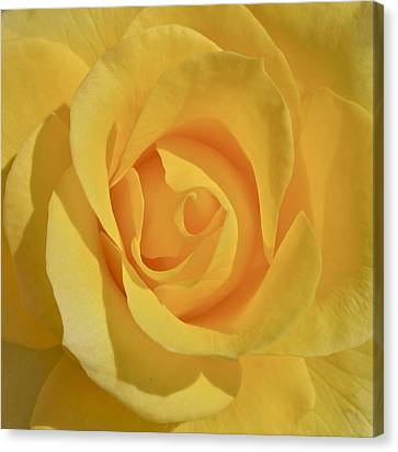Amarillo Canvas Print by Gwyn Newcombe