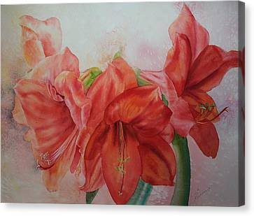 Amarylis Canvas Print by Ruth Kamenev
