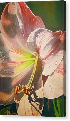 Amarylis Canvas Print by Tara Milliken