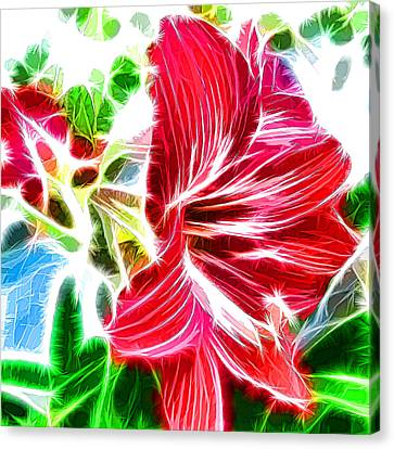 Amaryllis Blooms In A Garden Canvas Print by Lanjee Chee