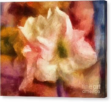 Amaryllis Colori Canvas Print by Lutz Baar