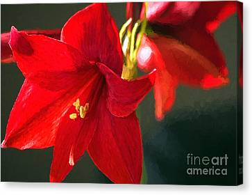Amaryllis Digital Photoart Canvas Print