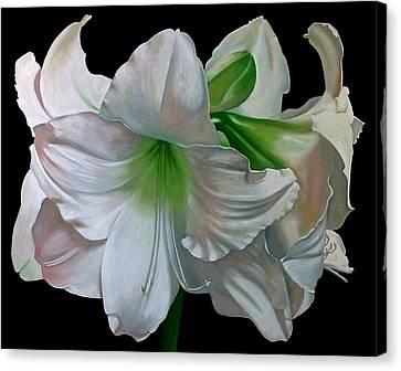 Amaryllis Canvas Print by Doug Strickland