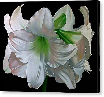 Amaryllis Canvas Print by Doug Strickland