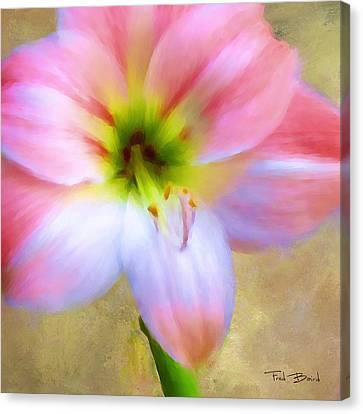 Amaryllis Canvas Print by Fred Baird