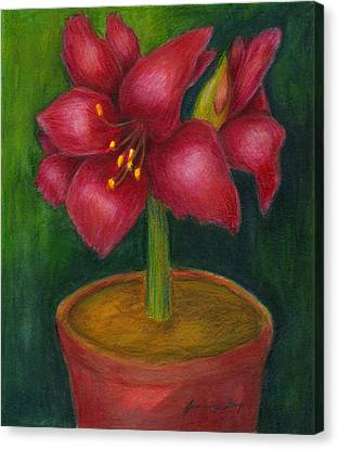 Canvas Print featuring the painting Amaryllis by Jeanne Kay Juhos
