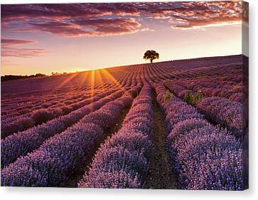 Amazing Lavender Field At Sunset Canvas Print by Evgeni Dinev