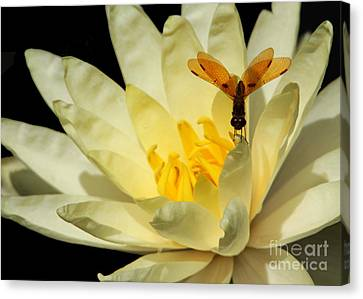 Faries Canvas Print - Amber Dragonfly Dancer Too by Sabrina L Ryan