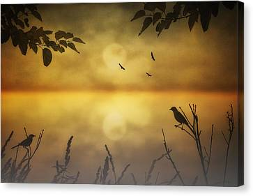 Amber Morning Canvas Print by Tom York Images