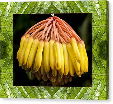 Canvas Print featuring the photograph Amber Pendant by Bell And Todd