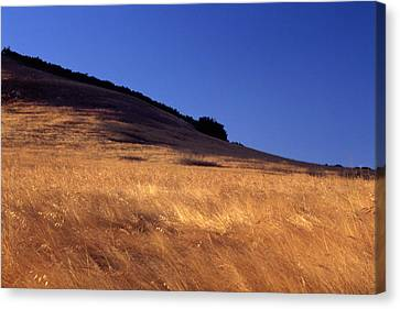Amber Waves - Montgomery Potrero Canvas Print