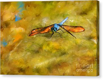 Amber Wing Dragonfly Canvas Print