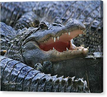 American Alligators Canvas Print