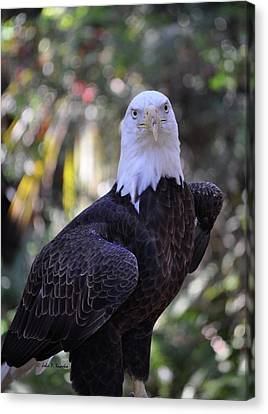 Canvas Print featuring the photograph American Bald Eagle 02 by John Knapko
