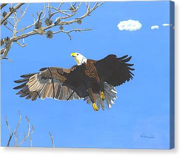 American Bald Eagle Canvas Print by William Demboski