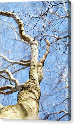 Canvas Print featuring the photograph American Beech Tree by Christina Rollo