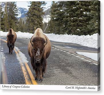 Canvas Print featuring the photograph American Bison In Yellowstone National Park by Carol M Highsmith