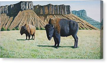 Bison Heard Canvas Print - American Bison by Joseph Kemeny