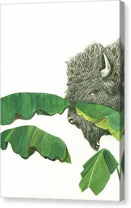 Banana Art Canvas Print - American Buffalo 1 by Juan Bosco