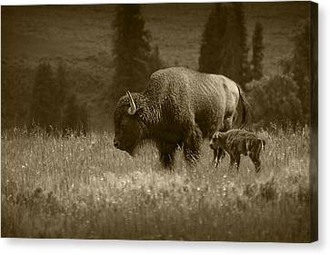 American Buffalo Bison Mother And Calf In Sepia Tone Canvas Print by Randall Nyhof