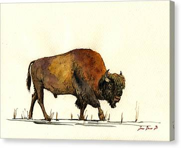 American Buffalo Watercolor Canvas Print by Juan  Bosco