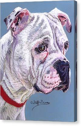 American Bulldog Canvas Print by Stephanie Grimes