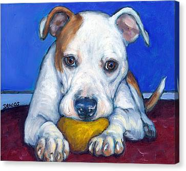 American Bulldog With Yellow Ball Canvas Print by Dottie Dracos