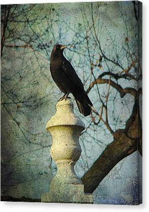 American Crow Canvas Print by Gothicrow Images