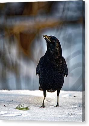 Canvas Print - American Crow In The Snow by Bob Orsillo