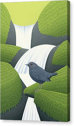 American Dipper Canvas Print by Nathan Marcy