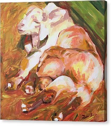 American Farm Sleepy Goats Canvas Print by Trina Teele