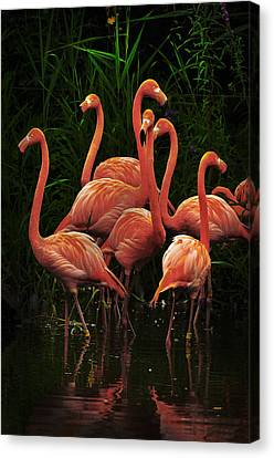 Canvas Print featuring the photograph American Flamingo by Michael Cummings