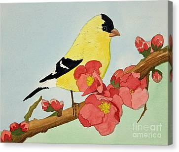 American Goldfinch Canvas Print by Norma Appleton