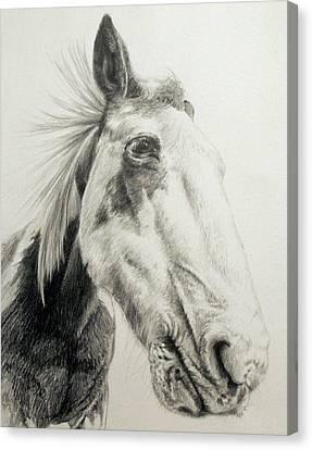 Canvas Print - American Paint Horse by Keran Sunaski Gilmore