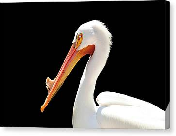 American Pelican Canvas Print by Jeannie Burleson