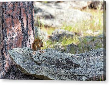 American Red Squirrel Canvas Print