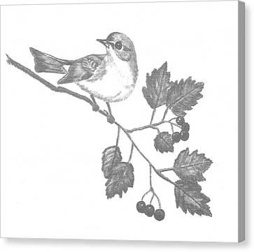 American Redstart Canvas Print by Catherine Burton