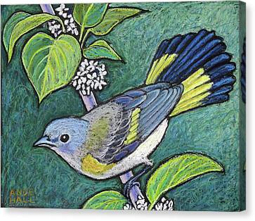 American Redstart Female Canvas Print by Ande Hall