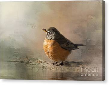 American Robin Morning Light Canvas Print