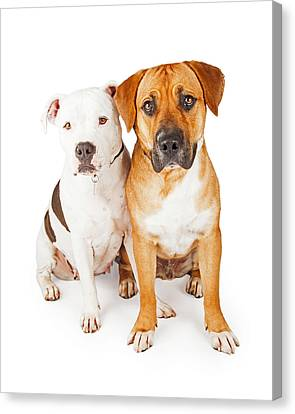 Large Mammals Canvas Print - American Staffordshire And Large Mixed Breed Dogs Sitting Togeth by Susan Schmitz
