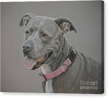 American Staffordshire Terrier Canvas Print by Charlotte Yealey