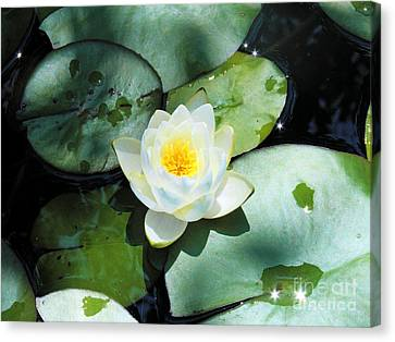 American Water Lilies Canvas Print